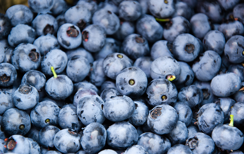 blueberries may prevent diabetes